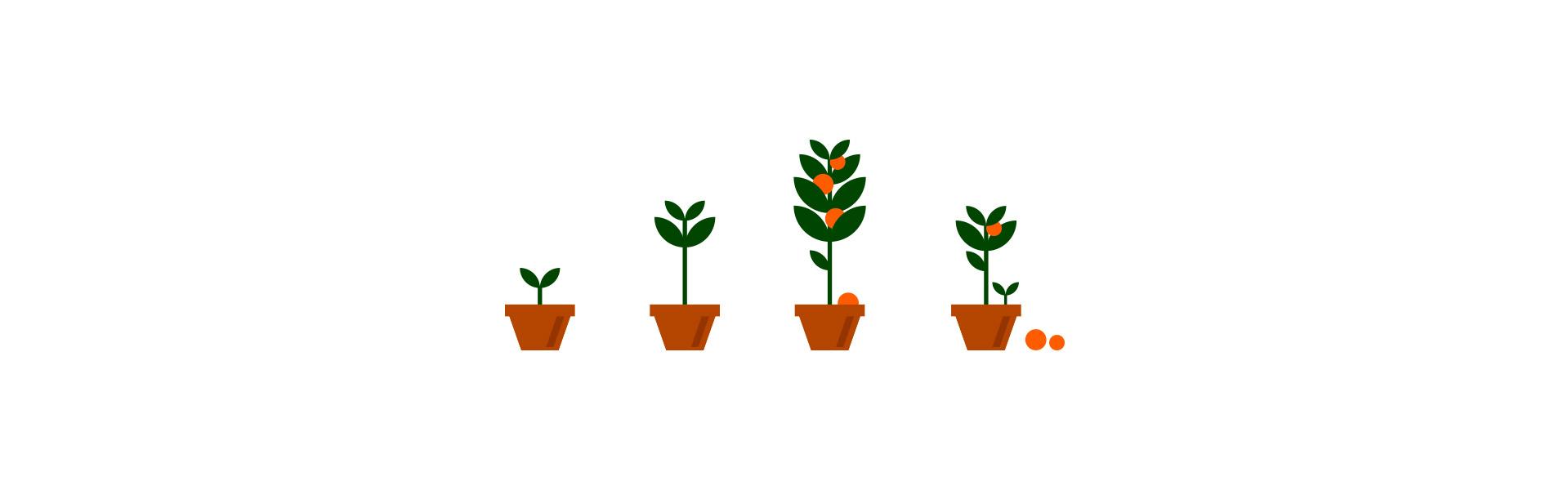 Illustrations of plants